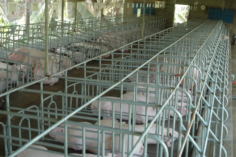 Chuồng trại chăn nuôi